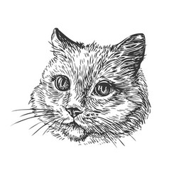 Hand-drawn portrait of cat sketch vector
