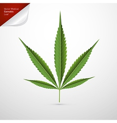 Medical Cannabis Leaf Isolated on White Background vector