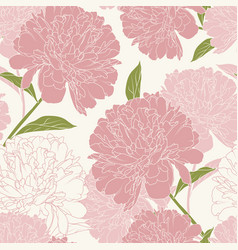 pink peony rose flowers elegant beautiful vector image
