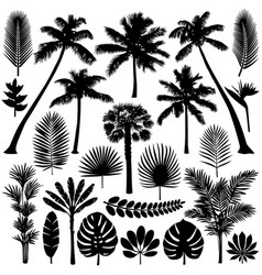 palm and tropical plant silhouette set vector image vector image