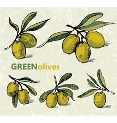 Green olives vector image