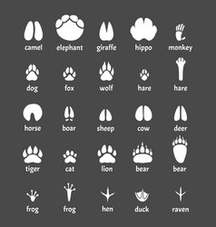 paw animals nature symbols wild animals trails vector image