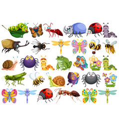 Set insect character vector