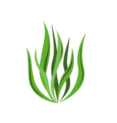 spirulina algae icon on white background vector image