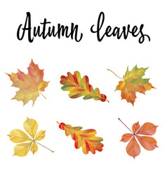 set of different autumn leaves vector image