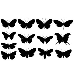 set of different butterflies vector image