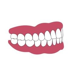 teeth and gums person vector image vector image