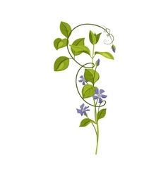 Bindweed Wild Flower Hand Drawn Detailed vector image vector image