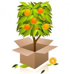 orange tree vector image