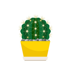 Cactus house plant in yellow pot vector