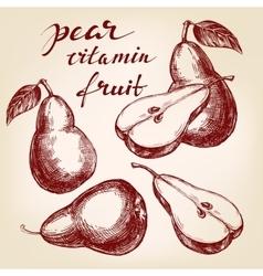 fruit pear set hand drawn llustration vector image