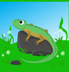 lizard on stone vector image