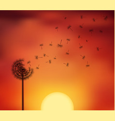 sunset seed escape vector image
