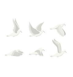 cartoon white dove bird set vector image vector image