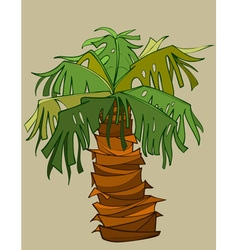 cartoon palm tree with a thick short barrel vector image