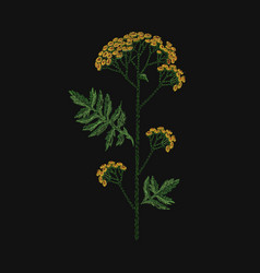 Tansy embroidered with yellow and green threads on vector