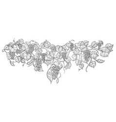 Vintage hand drawn grape branch isolated on white vector