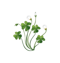 Shamrock Wild Flower Hand Drawn Detailed vector image vector image
