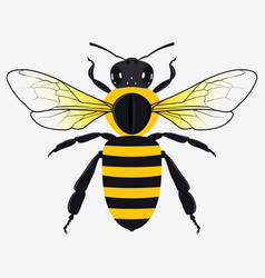 Detailed honey bee vector