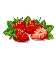 Fresh ripe strawberries vector