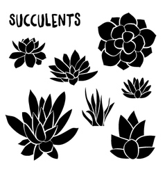 Graphic Set of succulents isolated on white vector image
