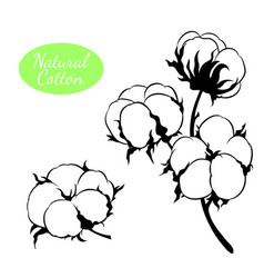 set of cotton plant branch with flowers vector image