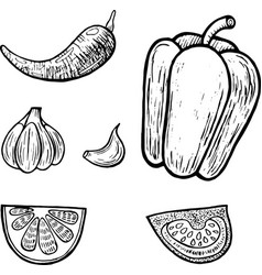 mexican vegetables set graphic coloring page for vector image