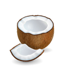 coconut pieces realistic isolated vector image