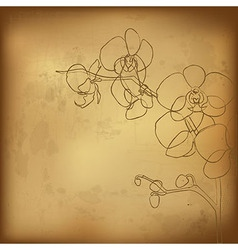 Orchid And Old Paper vector image vector image