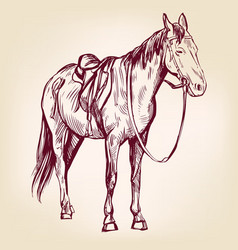 Horse hand drawn llustration realistic vector