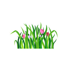 long green grass with blooming spring flowers vector image