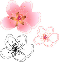 Peach cherry blosssom and outline isolated on vector