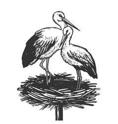 Stork in nest animal engraving vector