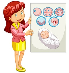 Woman holding diagram of embryo vector