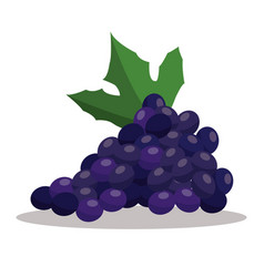 Grape nutrition healthy image vector
