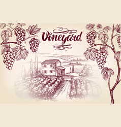 grape vine vineyard grape calligraphy text vector image