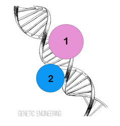hand drawn concept dna spiral vector image