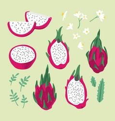 summer set with dragon fruit pitaya flowers vector image