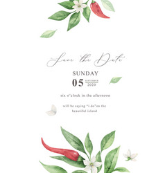 watercolor hand painted red hot chili vector image