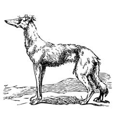 Borzoi dog engraving vector image vector image