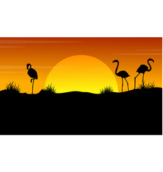 At sunset with flamingo silhouette landscape vector