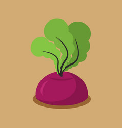 Beet growing isolated fresh vegetables in garden vector