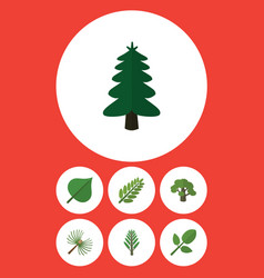 Flat icon nature set of rosemary foliage tree vector