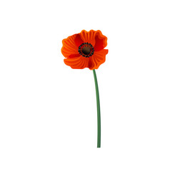 hand drawn icon of blooming poppy with vector image