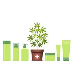 marijuana or cannabis plant in pot with hemp vector image