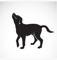 dog labrador on white background pet animals vector image
