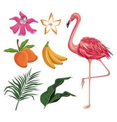 flamingo mango banana flower leaves nature vector image