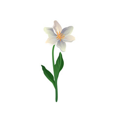 colorful icon of cute spring flower lily vector image
