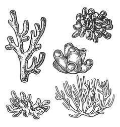 Coral sea plant engraving vector