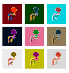 Icons set in flat style male reproductive system vector
